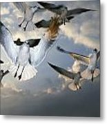 Seagulls In Flight Metal Print by Natural Selection Ralph Curtin