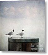 Seagulls Metal Print by Priska Wettstein
