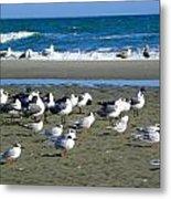 Seagulls Waiting  Metal Print