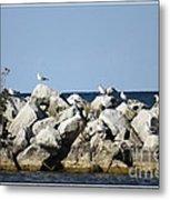 Seaguls On Boulders In Lake Erie Metal Print