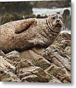 Seal Old Timers Metal Print