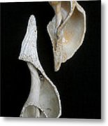 Seashell 031 Metal Print