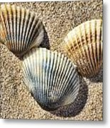 Seashells V2 Metal Print