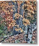 Season Change At Lost Maples Metal Print