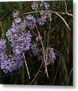 Seasonal Blues Metal Print