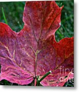 Seasonal Changes Metal Print