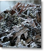 Seaweed And Oak Leaves Metal Print