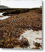 Seaweed Covered Beach Metal Print