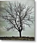 Secrets Of The Roots Metal Print