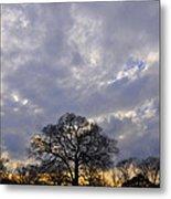 Sedgeley Tree Metal Print