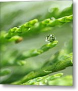 See The World In The Morning Dew  Metal Print