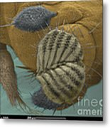 Sem Of A Fruit Fly Mouth Metal Print