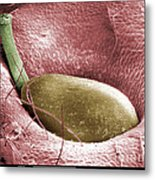 Sem Of A Strawberry Seed Metal Print