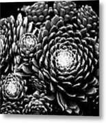 Sempervivum Metal Print
