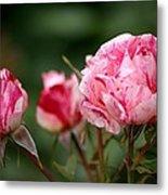 Sentimental Rose Metal Print
