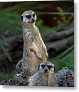 Sentry Metal Print by Skip Willits