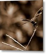 Sepia Dragonfly Metal Print