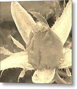 Sepia Rose Bud Metal Print