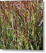 September Grasses By Jrr Metal Print