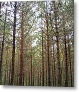 Serene Forest Metal Print