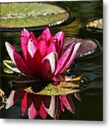 Serene Pink Water Lily Reflection Metal Print