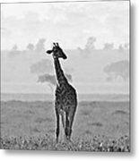 Serengeti Morning Metal Print