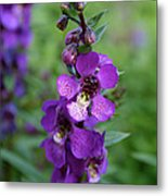 Serenita Purple Metal Print