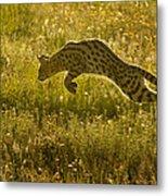 Serval Cat Pouncing Serengeti Metal Print