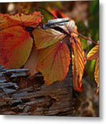 Shade In Fall Metal Print