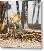 Shaded Grazing Metal Print