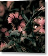 Shaded In The Evening Metal Print