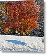 Shadows In The Snow Metal Print