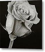 Sharp Rose Black And White Metal Print
