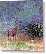 Shasta County Deer  Metal Print