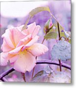 She Like The Ghost Beside Me. Scottish Rose Metal Print