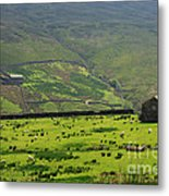 Sheep Graze In A Pasture In Swaledale Metal Print