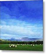 Sheep Grazing In Field County Wicklow Metal Print