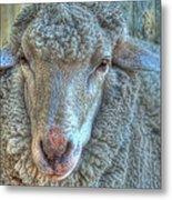 Sheep Metal Print by Imagevixen Photography