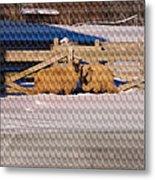 Sheep In A Snowy Field Metal Print