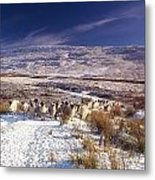 Sheep In Snow, Glenshane, Co Derry Metal Print by The Irish Image Collection