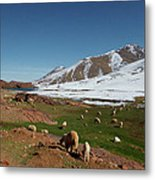 Sheep In The Atlas Mountains 02 Metal Print