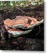 Shelf Mushrooms Metal Print