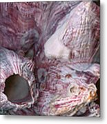 Shell - Conchology - Volcano Island Metal Print