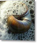 Shell In Sea Foam Metal Print