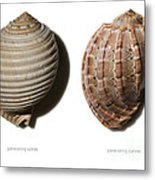 Shell Line Systems Metal Print
