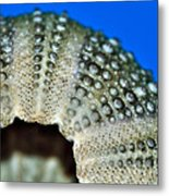 Shell With Pimples 2 Metal Print