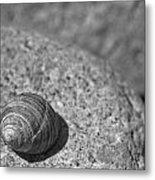 Shells IIi Metal Print by David Rucker