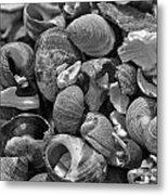 Shells V Metal Print