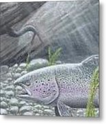 Shelter- Rainbow Trout Metal Print