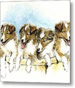 Sheltie Pups Metal Print